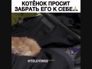 Котёнок просит внимания