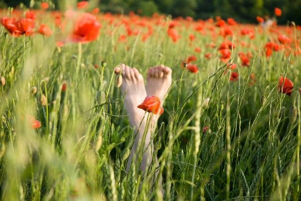 ноги, маки, Никон 18-70, летние фотографии