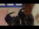 Немчики мишки