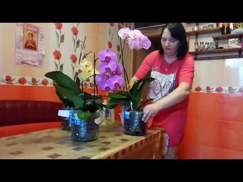Почему я сажу орхидеи в большие горшочки