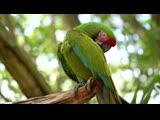 Попугаи Живая природа Южной Америки Какаду смешные птицы Birds in South America