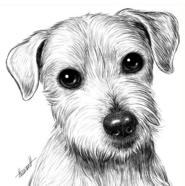 Рисуем собаку карандашом. Для начинающих.