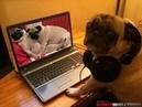 Đố Bạn Nhịn Cười Khi Xem Hết Video Với Lũ Chó Mèo Hài Hước