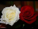 Евгений Южин Две розы