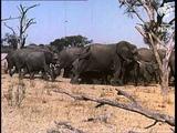 Rhodesia (1964)