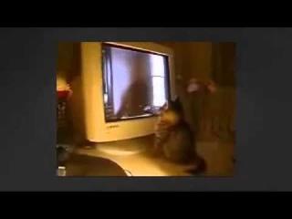 МОИ ЗАБАВНЫЕ ЖИВОТНЫЕ Любитель смотреть телевизор