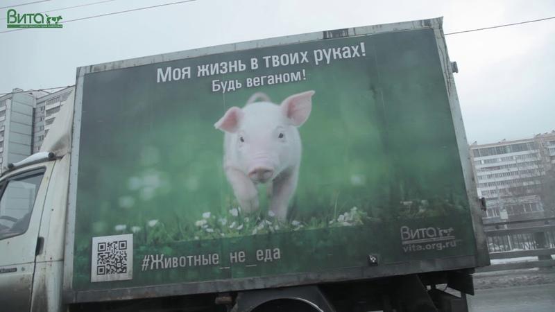 Первая в России веганская соцреклама
