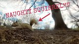 WHAT IT FEELS LIKE TO BE A SQUIRREL!!! SQUIRREL WITH A GOPRO! :)