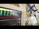 Organtransplantation bei lebendigem Leib