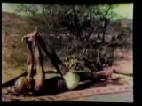 Кришнамачария - 1938 (4 of 5)