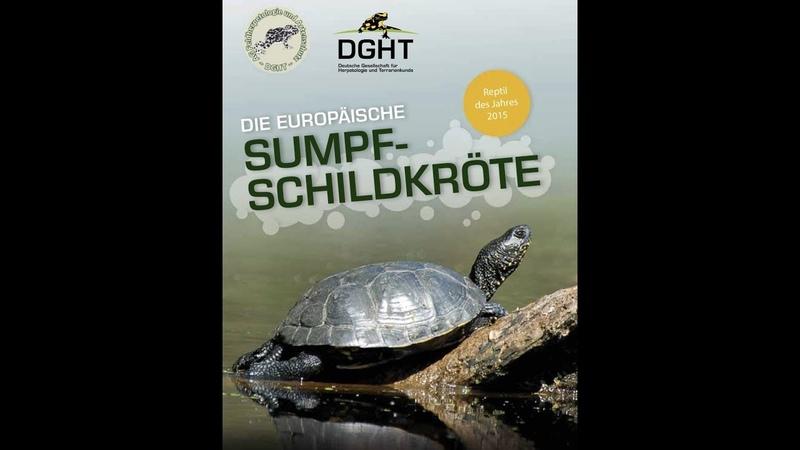 Reptil des Jahres 2015 - Die Europäische Sumpfschildkröte (DGHT)