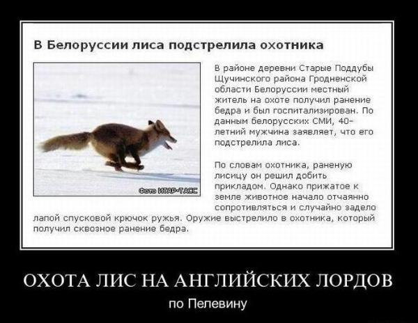 Демотиваторы лисы
