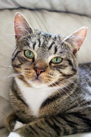 4-летний кот Smudge