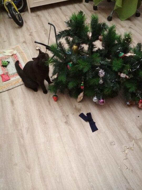 Мой кот все-таки сделал это