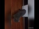 Когда в доме появилась собака