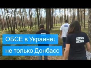 Янтарные войны и другие проблемы: как миссия ОБСЕ работает в Западной Украине