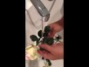 Цветы из фоамирана можно мыть. Автор видео: Елена Юлина - мастер по изготовлению цветов из фоамирана
