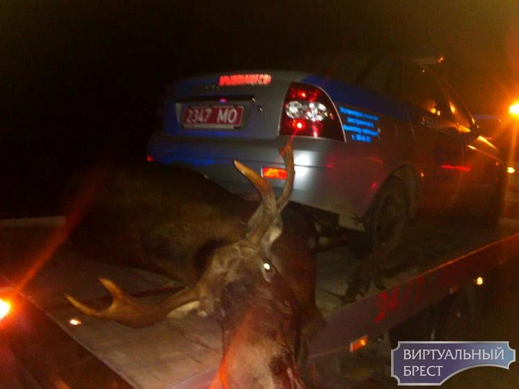 Фотофакт: служебный автомобиль сбил лося на трассе