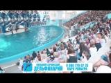 Большой Сочинский Дельфинарий в парке