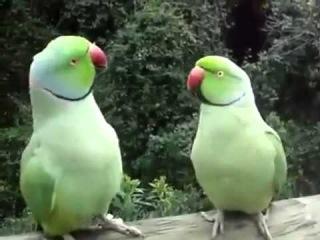 Смешные Животные Попугаи Ржачно Говорят