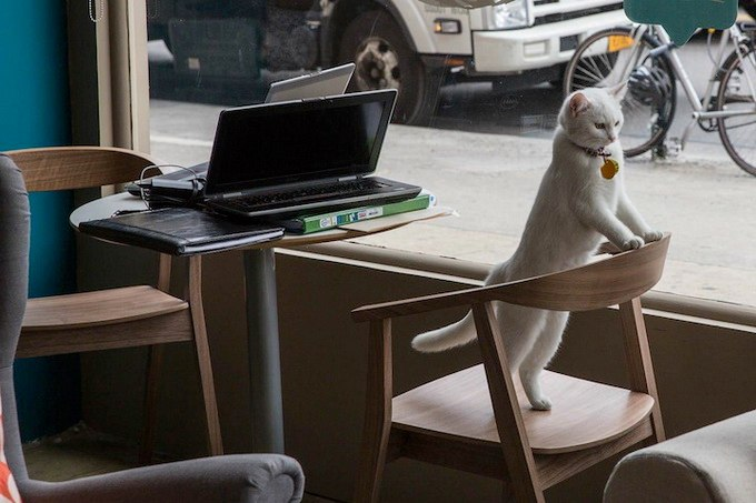Посетителей кафе встречают ласковые и готовые к общению мурлыки