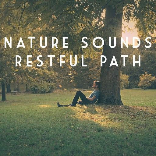 Rain альбом Nature Sounds Restful Path