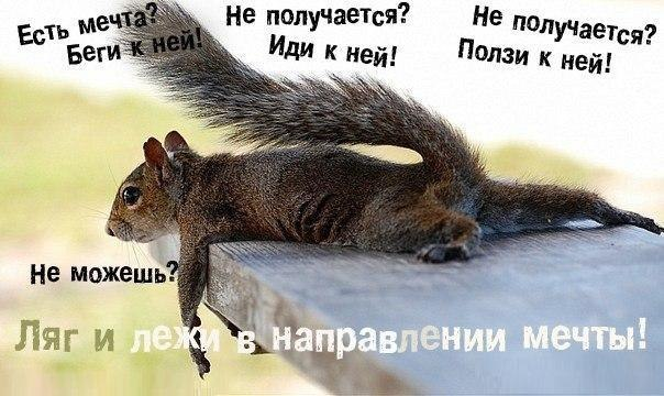 http://cs317320.vk.me/v317320560/7157/fWaiXfw8_TE.jpg