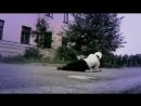 Ментовские войны-песня Шилова