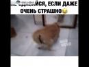 Кот смельчак...