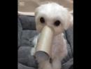 Как сделать из собачки слоненка