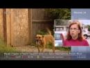 Проект закона о домашних животных продолжает обсуждаться Госдумой