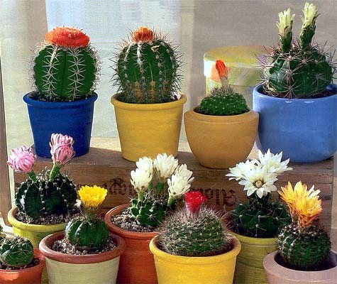 зодиак - Магия растений. Магические свойства растений. Обряды и ритуалы. Амулеты и талисманы из растений.  Oo5u94ismVc