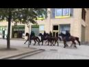 Chemnitz - Polizei-Reiterstaffel verhindert Durchbrechen der Antifa in Richtung der Patrioten