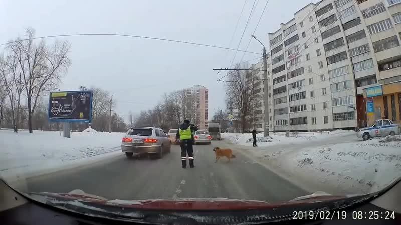 Челябинский инспектор ДПС перевел через дорогу хромую дворнягу xtkz,bycrbq bycgtrnjh lgc gthtdtk xthtp ljhjue [hjve. ldjhyzue xt