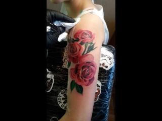 розы тату без контура