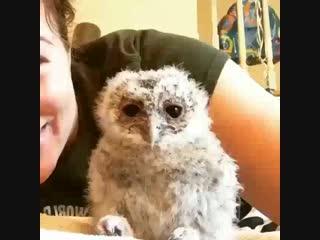 Милый совёнок