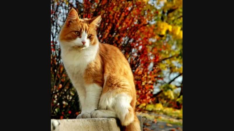 Осень рыжей кошкой