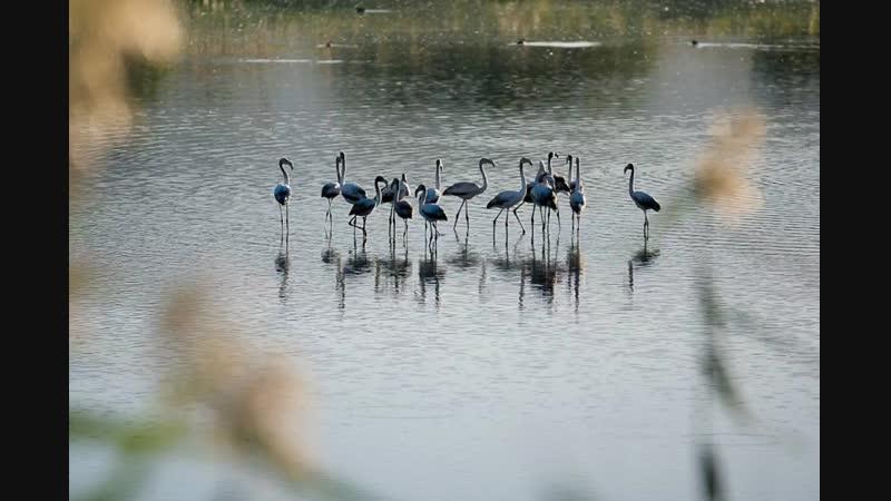 Сезон визита перелетных птиц
