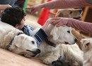 Собаки помогают больным детям