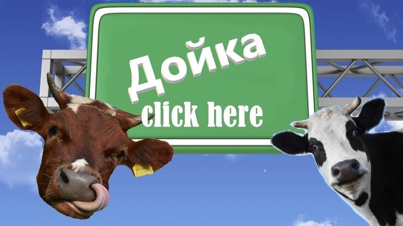 Работа в Швеции на ферме: Процесс доения коров Скандинавия (Швеция)\Work in Sweden milking
