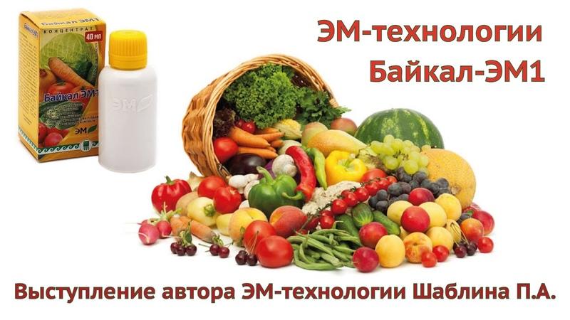 Шаблин про Байкал-ЭМ1, ЭМ-технологии