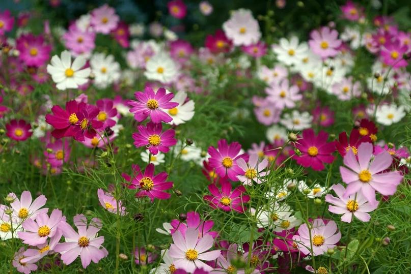 Как собирать семена если семена развиваются в соцветии корзинка?