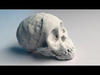 3D-печать в археологии. Череп древнего ребенка. Radiolab: