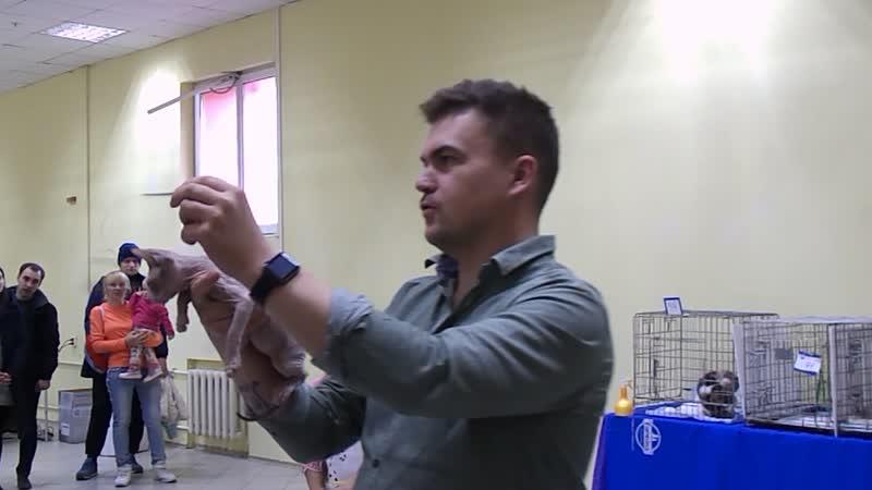 WCF-Ring Junior. IV место. Эксперт Павел Рудов