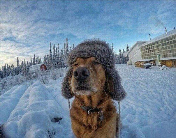 собака зимой в шапке