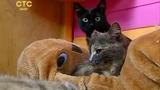 Операция мягкие лапки для кошек, удаление когтей, онихэктомия. Все за и против.