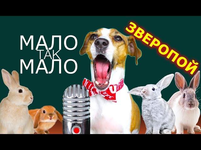 ЕГОР КРИД - МАЛО ТАК МАЛО СОБАКА ДЖИНА ПОЁТ ЗВЕРОПОЙ | Elli Di Pets