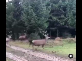 Santa's reindeer getting in some off season training!
