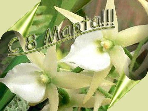 Картинка с 8 марта креативная с орхидеей