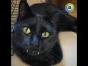 Кот вампир по кличке Манки прямо Дракула во плоти